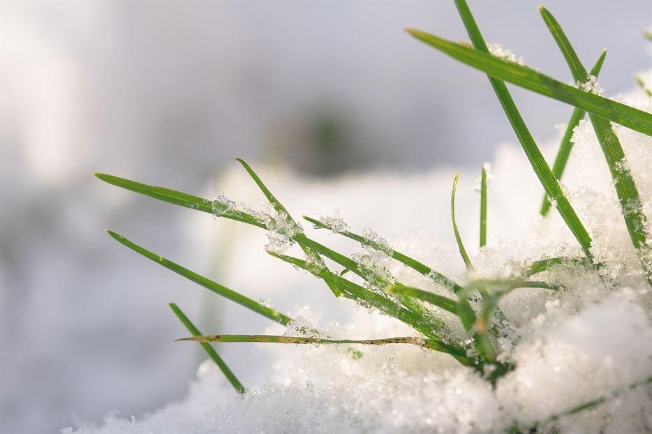 clánok ako pripraviť trávnik na zimu unicarback_ udrzba exteriérov _