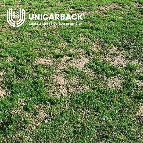 Fusarium nivale - plesen snezna - udrzba exterierov - kosenie travy - unicarback